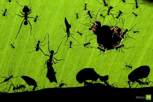 """Фотографии дикой природы. Конкурс """"Золотая черепаха"""" ... (19 фото)"""