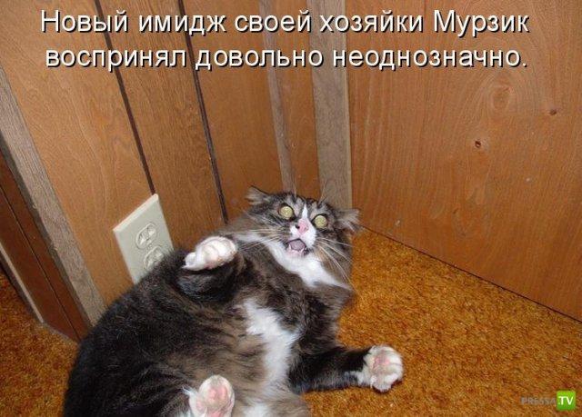 Котоматрица (18 фото)