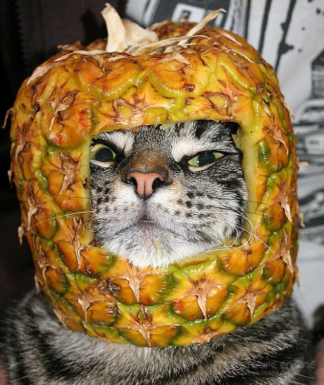 Кошки в фруктах... или мои хозяева-дебилы (12 фото)
