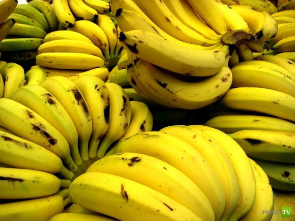 Все о бананах (2 фото)