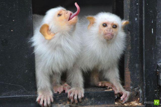 Эти забавные животные, часть 33 (40 фото)