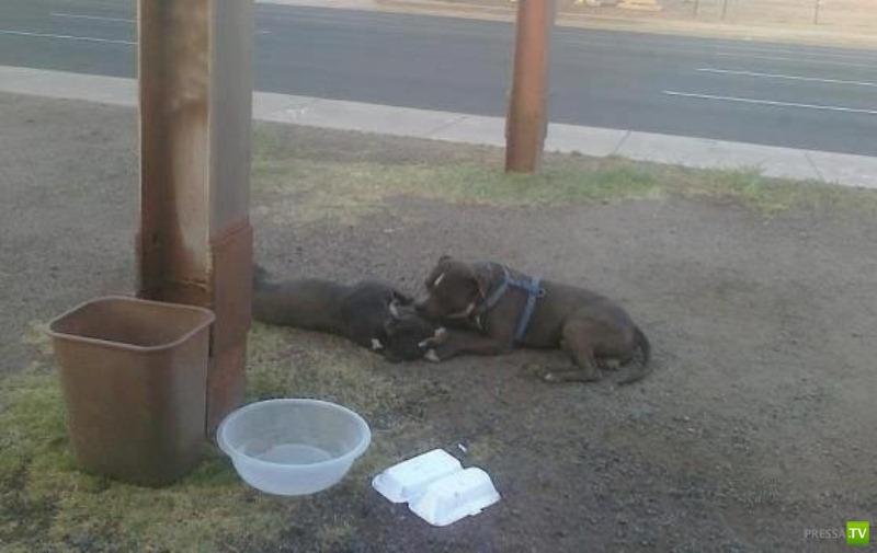 Собачья верность (2 фото)