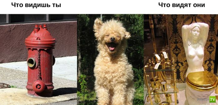 Мы по разному смотрим на одни и те же вещи... Взгляд животного и человека (11 фото)