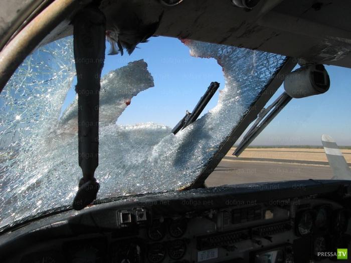 Самолет столкнулся с птицей (8 фото)