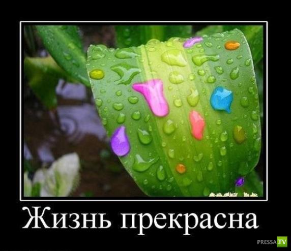 Как надо жить - инструкция...