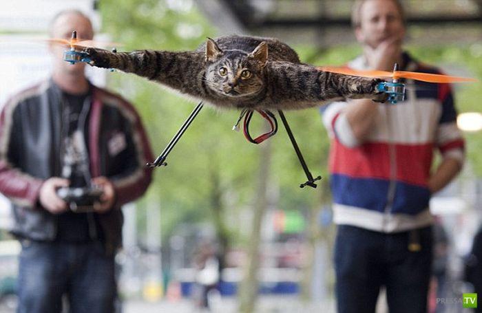 Летающий кот Барта Янсена (5 фото + видео)