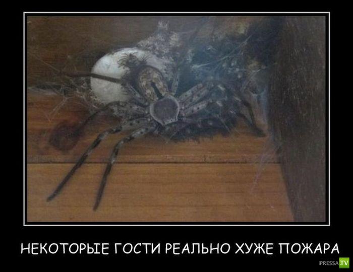 демотиваторы про паук для