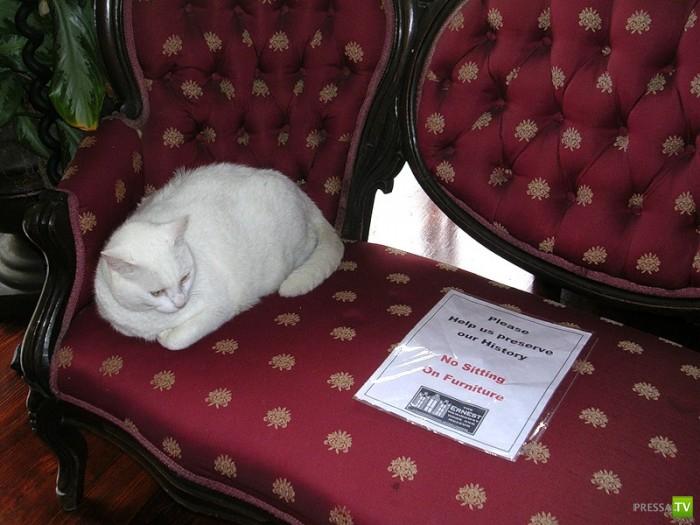 Эрнест Хемингуэй любил кошек (13 фото)