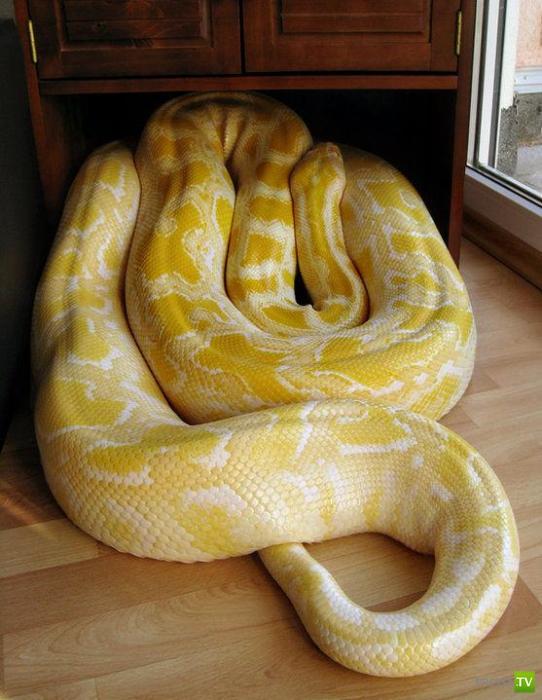 Держит дома змею... (11 фото)