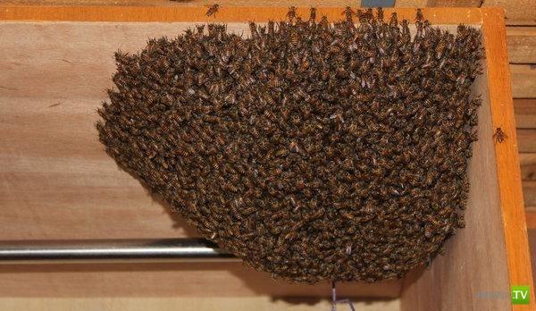 У китайского студента в шкафу - пчелиный рой (2 фото)