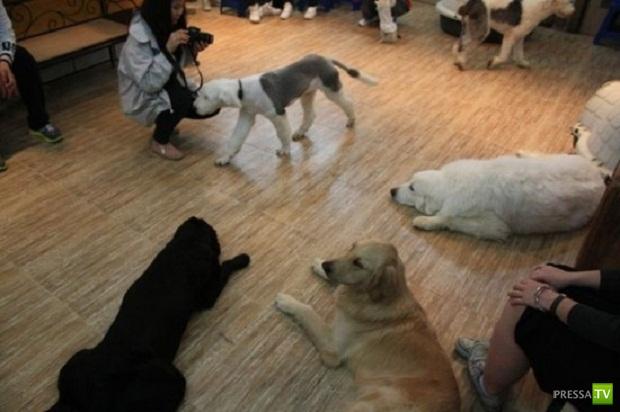 """В Сеуле появилось """"Dog Cafe"""" (5 фото + видео)"""