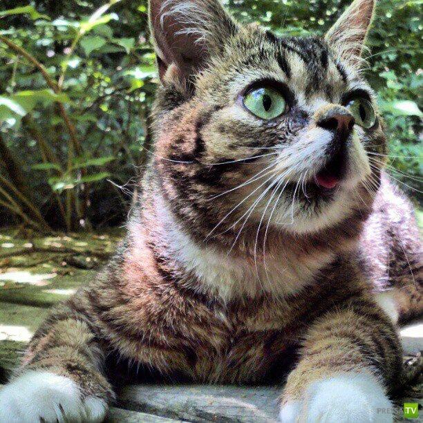Эти забавные животные. Кошка Little Bub - новая звезда Facebook (18 фото + 2 видео)
