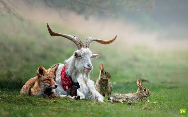 Эти забавные животные, часть 59 (44 фото)