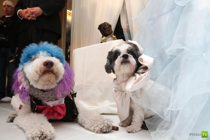 В нью-йоркском отеле  сыграли пышную свадьбу двоих собак за $158000 (9 фото)