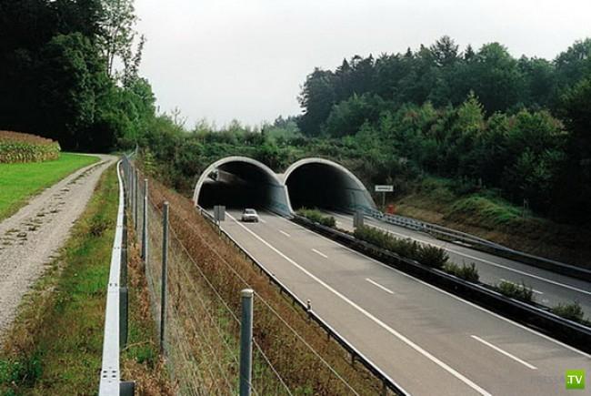 Мосты для зверюшек (15 фото)