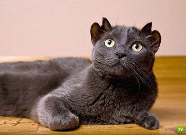 У кота четыре уха (3 фото)