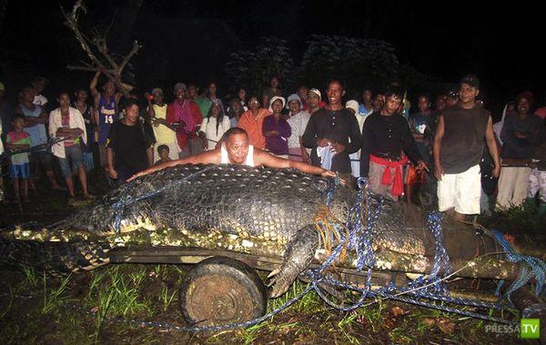 Крокодил попал в Книгу рекордов Гиннеса (5 фото)
