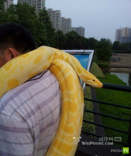 Китаец выгуливает своего питона (6 фото)