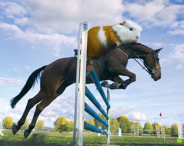 Прикольный олимпийский календарь (12 фото)