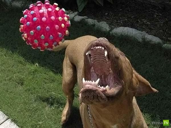 Добрейшая собачка (14 фото)