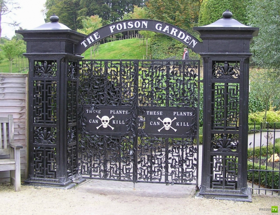 Странное место - Сад ядовитых растений Альнвик в Англии (11 фото)