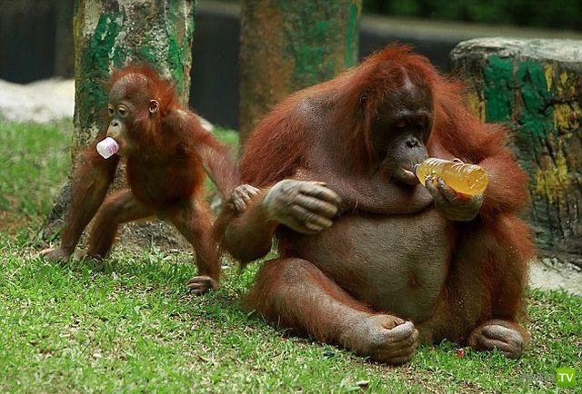 Прикольные картинки животных пьяных