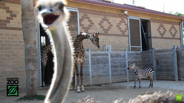 Эти забавные животные, часть 76 (39 фото)