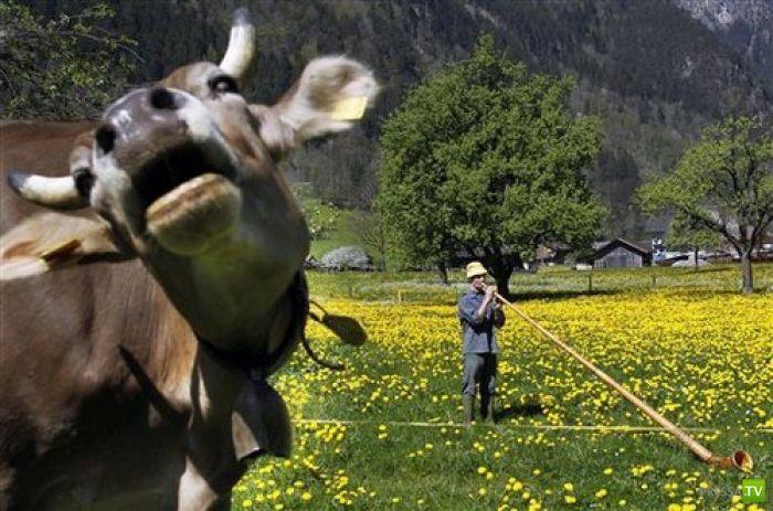 Смешные фотобомбы и бомбочки с животными (66 фото)