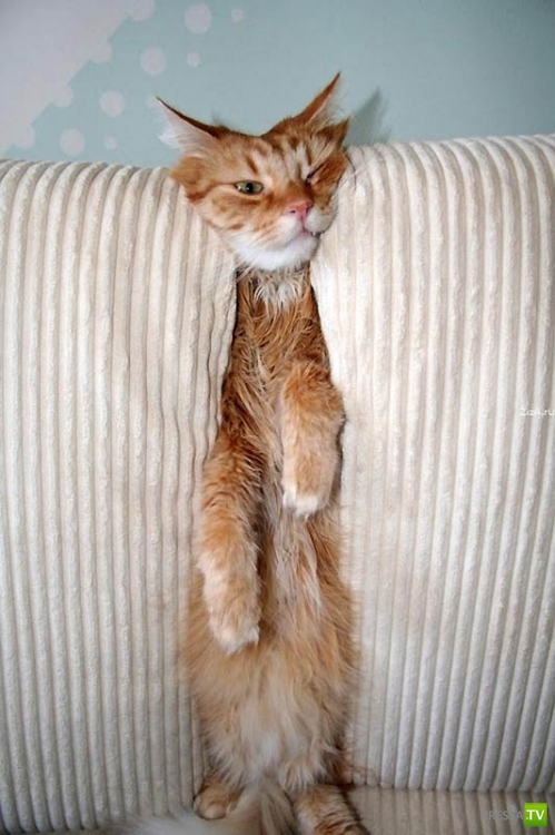 Любимые кошачьи места (26 фото)
