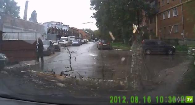 Внезапно перед машиной упало дерево...
