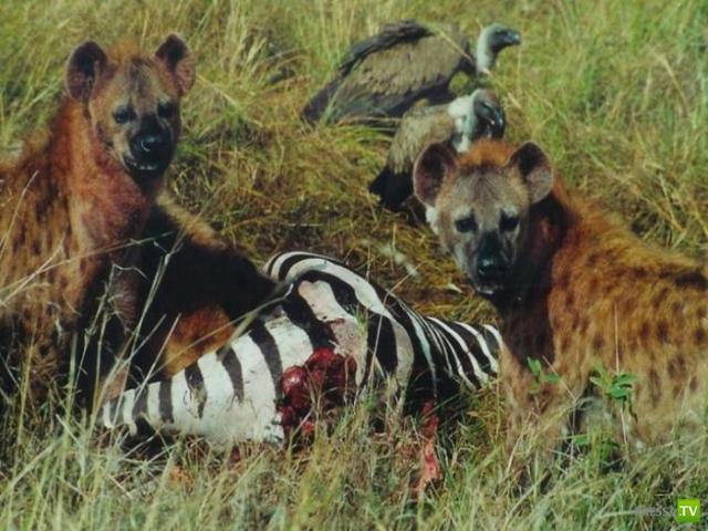 Самые распространенные заблуждения о животных (3 фото)