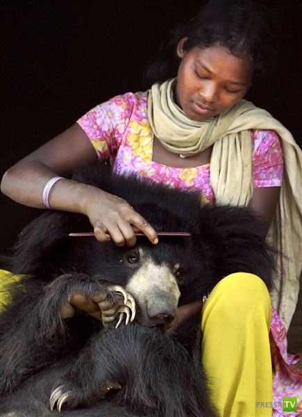 В индийской семье жил медведь (8 фото)