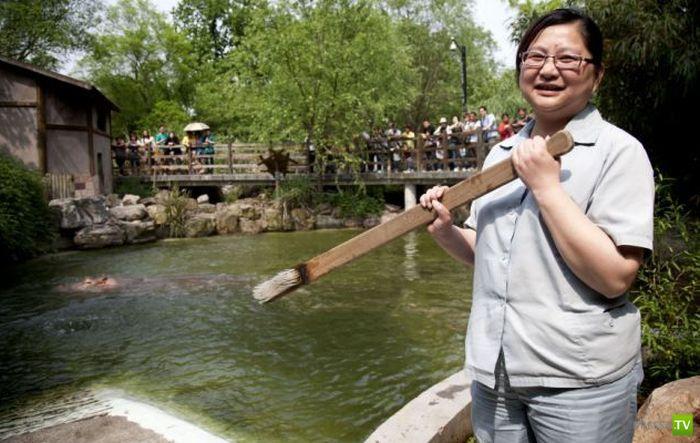 Зубная щетка для бегемота в Шанхайском зоопарке (5 фото)