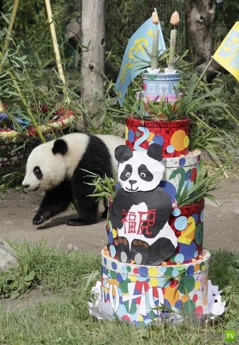 День рождения панды (6 фото)