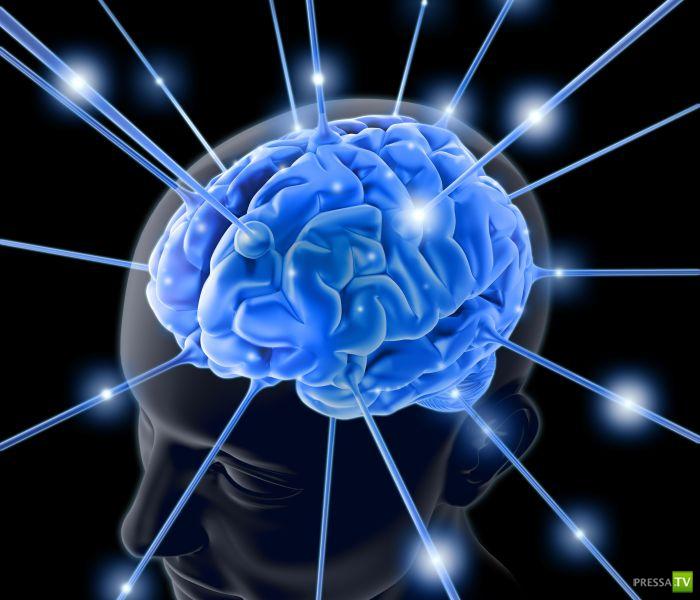Что влияет на умственную деятельность человека...