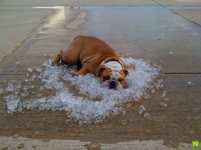 Невыносимая летняя жара (35 фото)