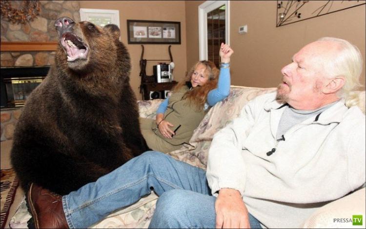Домашнее животное - медвежонок Билли (9 фото)