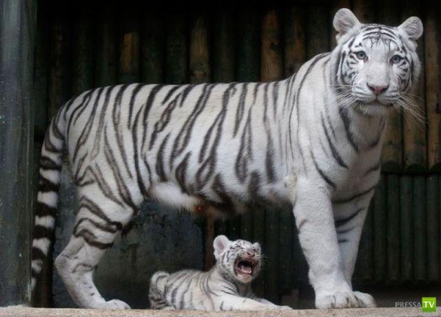 Эти забавные животные, часть 94 (37 фото)