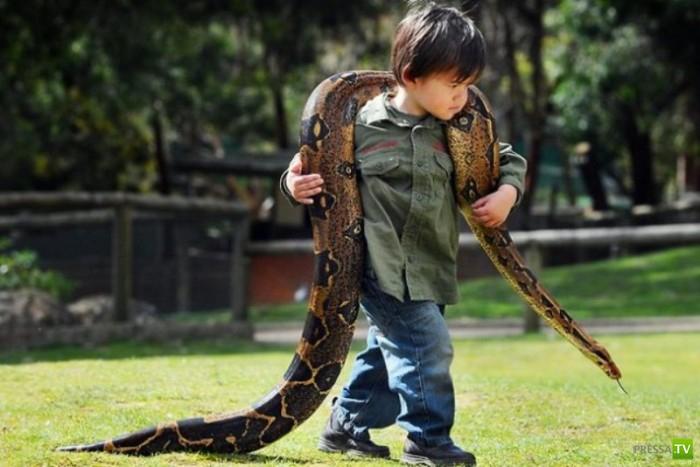 Двухлетний мальчик дружит с удавом... (12 фото)