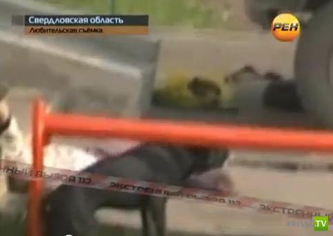 Терьер покусал хозяина и стал бросаться на окружающих... в Свердловской области