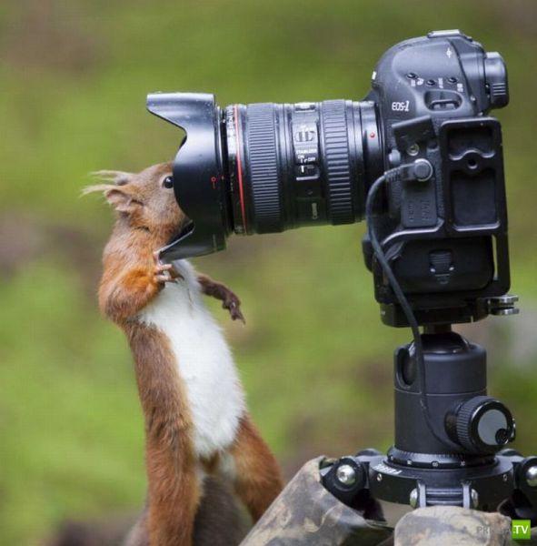 Эти забавные животные, часть 96 (44 фото)