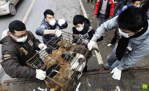 Смертельные ошейники для китайских собак...