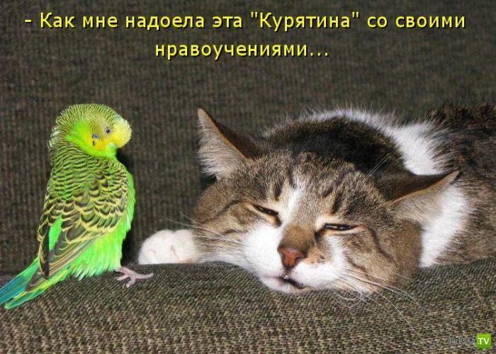 Веселые котоматрицы (50 фото)