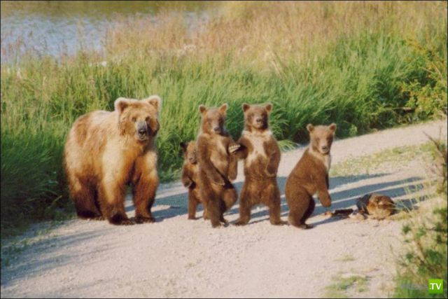 Эти забавные животные, часть 99 (45 фото)