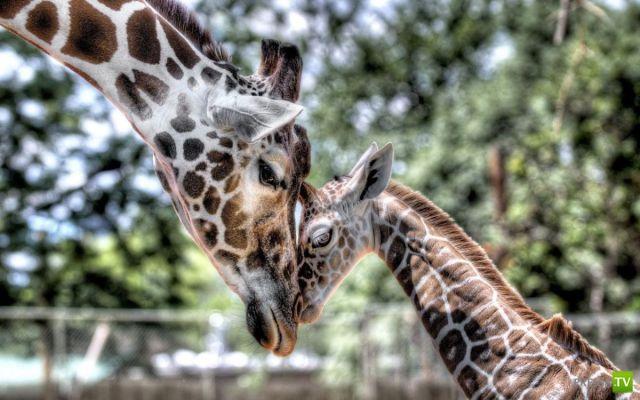 Эти забавные животные, часть 100 (41 фото)