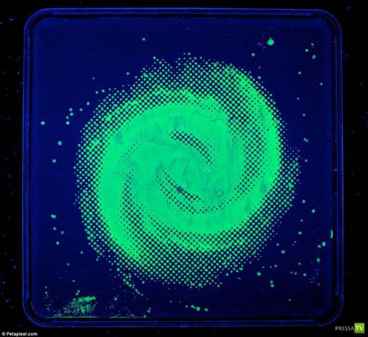 Картины из бактерий (7 фото)