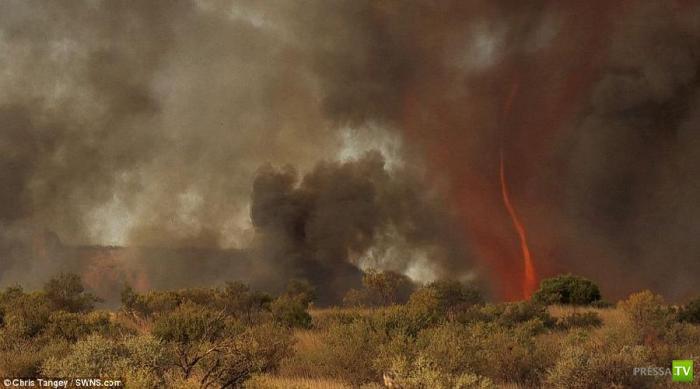 Удивительное и очень редкое природное явление - огненный торнадо в Австралии (5 фото + видео)