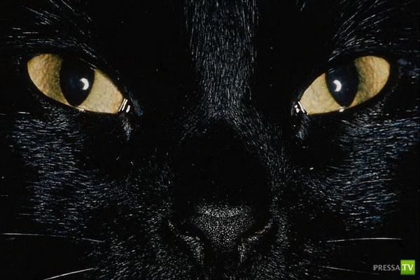 Неожиданные объяснения кошачьих повадок (6 фото)