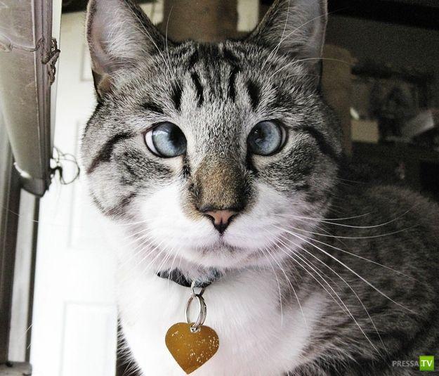 Новая интернет-знаменитость - косоглазый кот по кличке Спанглс! (6 фото)