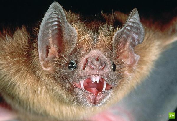 Необычные органы чувств, которыми обладают животные ... (6 фото)